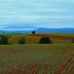 初秋の田園風景