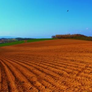 畑作地帯の川西の丘での、畑のアートです。
