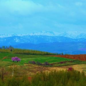 5月の川西の丘は、何処も見応えのある風景です。