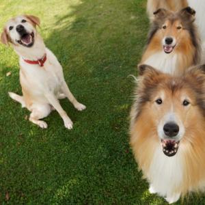 おともだち犬と遊ぶ。