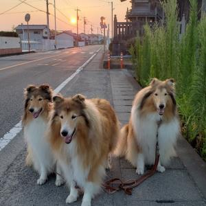 3頭飼いになってよくやる失敗。