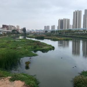 中国で魚釣り。