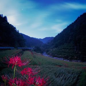 星景サルベージその75 夜に手向ける花