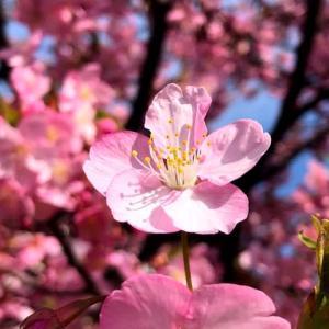 咲き始めの春