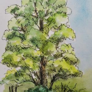 南湖院の楠を描く