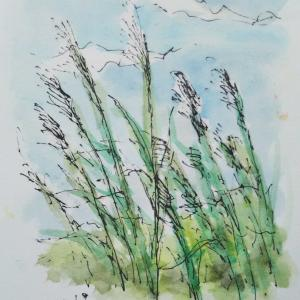 里山で描く 3