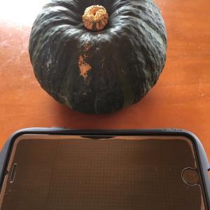かぼちゃの旅