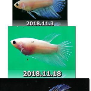 【ベタ】カエサルJr. 5号 あれから5ヵ月