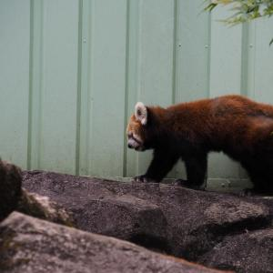 江戸川区自然動物園 うらがわ探検 その2 動物達