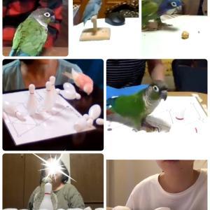 愛鳥と一緒に ポウリングを楽しむ会