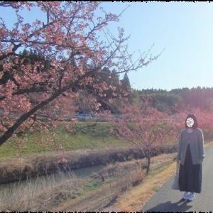 着画☆SM2・CUBE SUGAR☆河津桜☆丸井さん全品僧侶無料