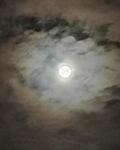 着画☆上下SM2☆月のうさぎ