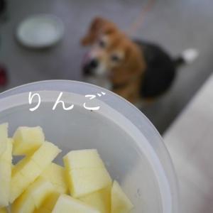 リンゴを食べる犬