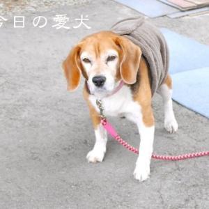 今日の愛犬