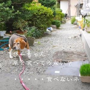 今日の愛犬 9/22