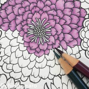 油性色鉛筆と水彩色鉛筆 私の取り組み方や没頭具合の違い
