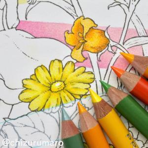 森の少女の物語②お花をプリズマカラー3色で塗る|おかえりモネOP風