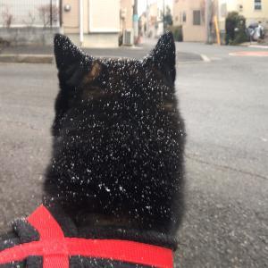 東京にも大雪?