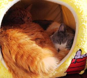 今日の猫ちゃん達!