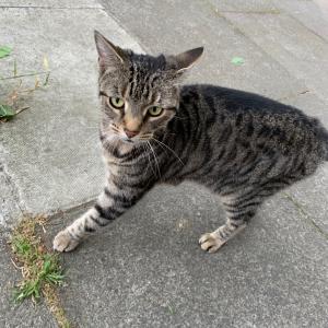 ご近所の猫ちゃん