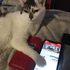 猫の手を借りる