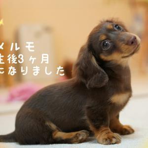 ☆メルモ3ヶ月☆