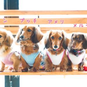 ☆West Dog Park☆