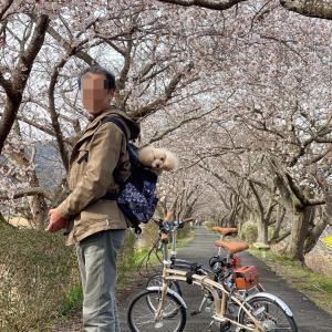 一足早い 春