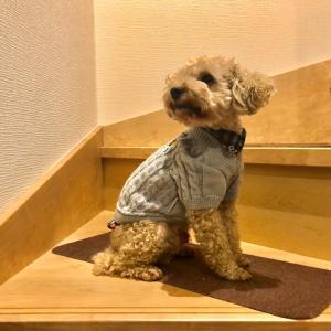 犬用!アーノルドパーマー の新作を着こなす犬。