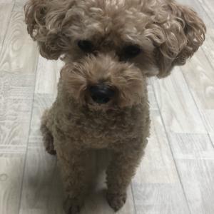 台風の時撮影した愛犬の動画