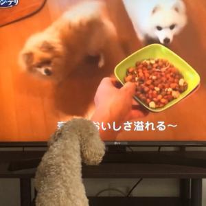 話題のグランデリ動画を愛犬に見せてみた