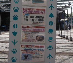 とべ動物園媛ちゃんの誕生会