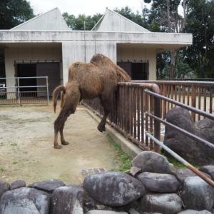 とべ動物園ラクダ舎