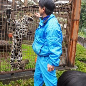 とべ動物園ねこ歩きイベント