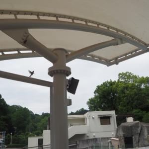 とべ動物園スズメの巣?