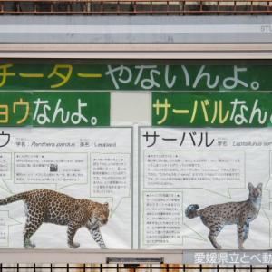 とべ動物園チータやないんよ