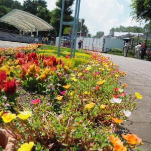 とべ動物園花壇の花が咲きそろう
