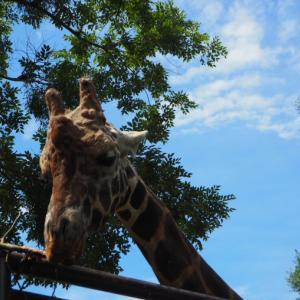 とべ動物園リュウキ君が目の前に