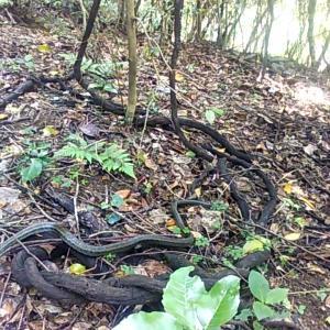 山で蛇を踏みそうになる