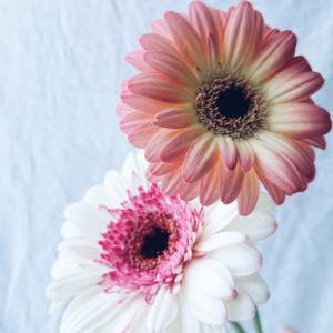花のある暮らしのススメ