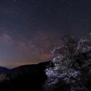 天の川と駒つなぎの桜