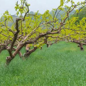 富有柿の産地