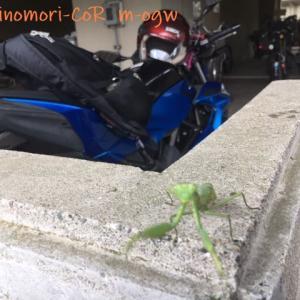 バイクとカマキリと