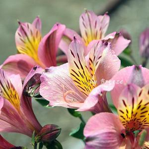 ピンク色の花・・・