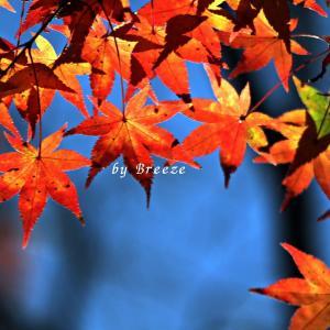 秋の色も風景も見納めかなぁ・・・
