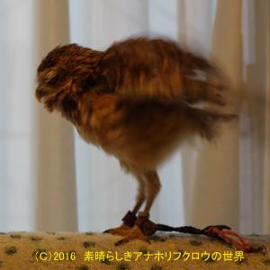 新着フォト(高速身震い!)