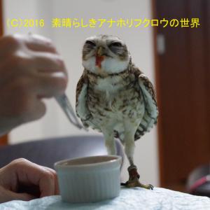 新着フォト(好き嫌い・・・?)