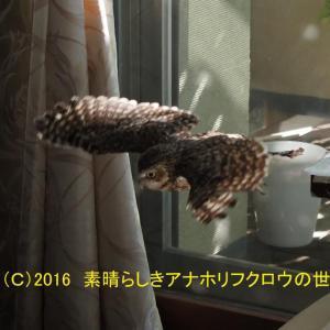 新着フォト(ハンググライダー)