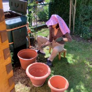 2020年 やっと本格的庭仕事開始