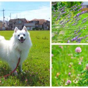 近所の広場 犬散歩